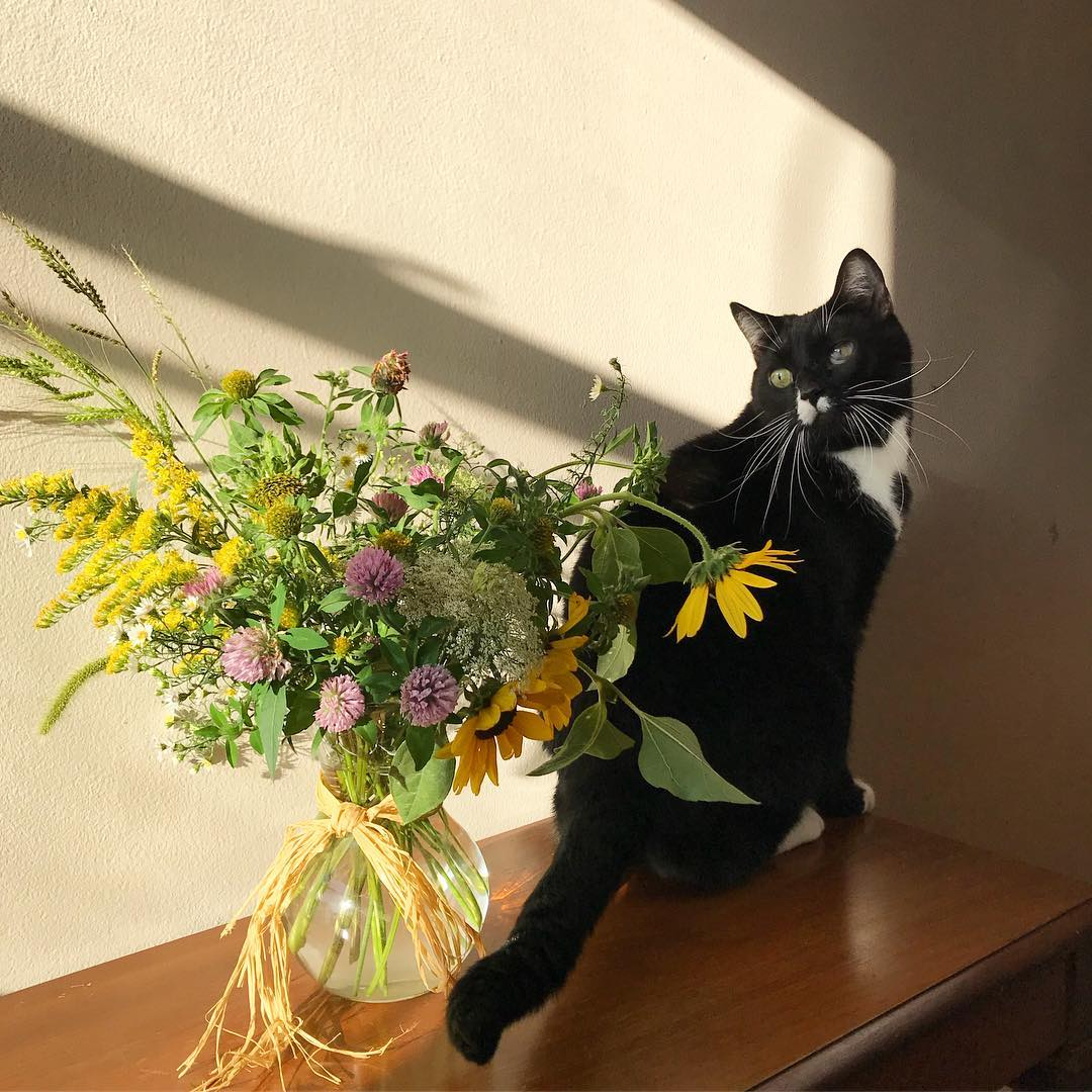 handsome tuxedo cat and wildflowers