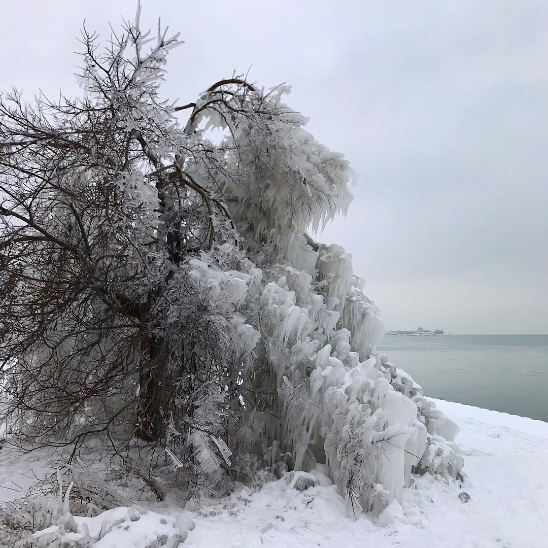 frozen lakeside tree on the Chicago lakefront